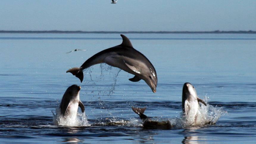 Un grupo de delfines divirtiéndose.
