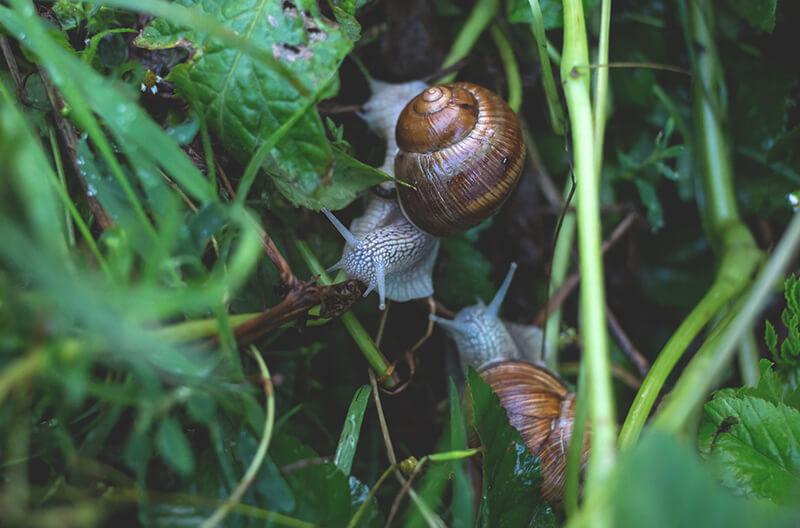 Caracoles - Animales invertebrados