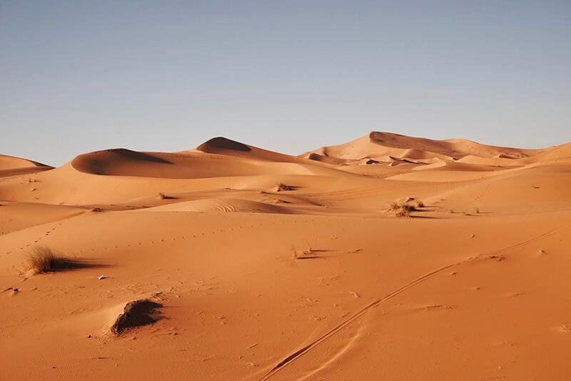 En el desierto viven algunos animales terrestres