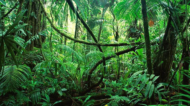 Bioma de una selva