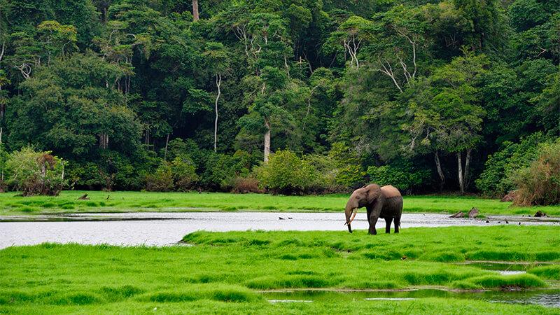 Bosque Africano