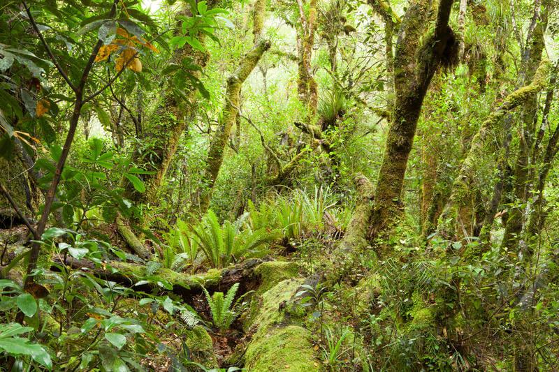 Selva templada