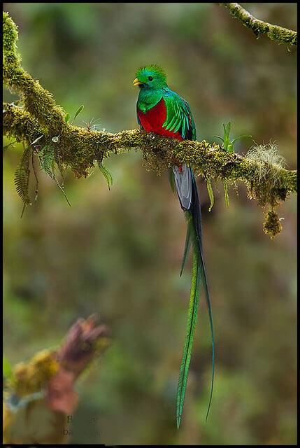 Imagen de un quetzal y su plumaje