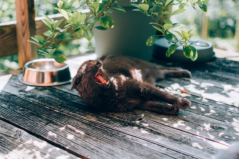 Gato doméstico durmiendo