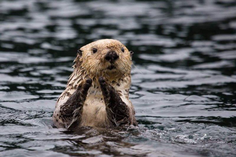 Una nutria disfrutando de una tarde de baños.
