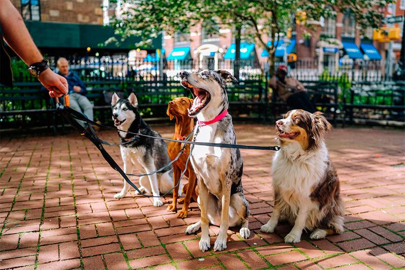 Diferentes razas de perro paseando