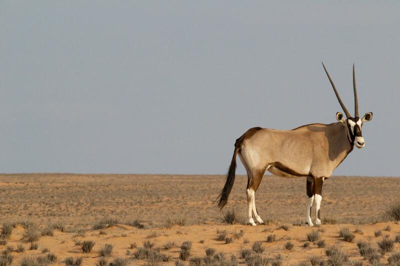 La mayoría de especies habita en África.