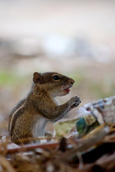La ardilla tiene una dieta muy variada.